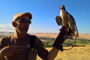 The Starling and the Falcon